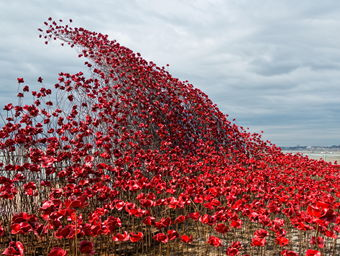Poppies: Wave image