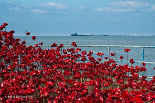 Poppies: Wave gallery image